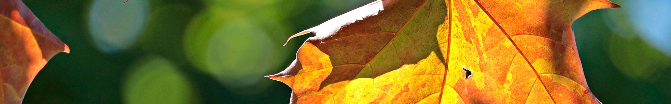 Eventos relacionados con la Red Transfronteriza Biomasa