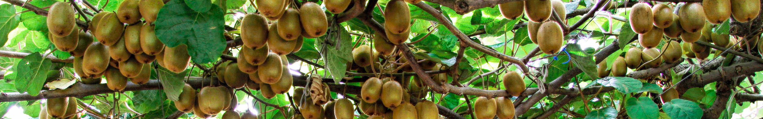 Apoio en projetos: Rede Transfronteiriça de biomassa