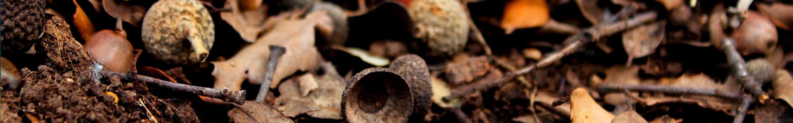 Resultados de la Red Transfronteriza Biomasa